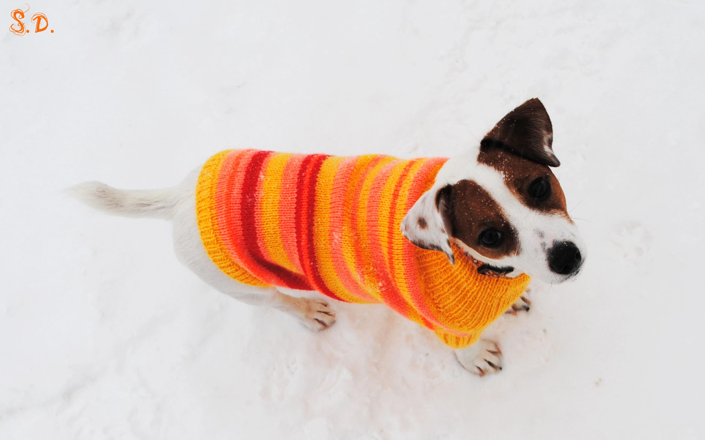Связать свитер для джек рассела